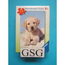 Golden retriever pup 54 st nr. 09 430 1-11
